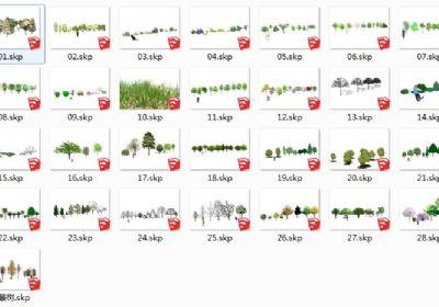 29个手绘植物SU草图大师模型下载