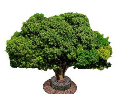 2D芒果树SU模型