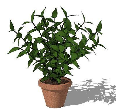 盆栽植物sketchup模型